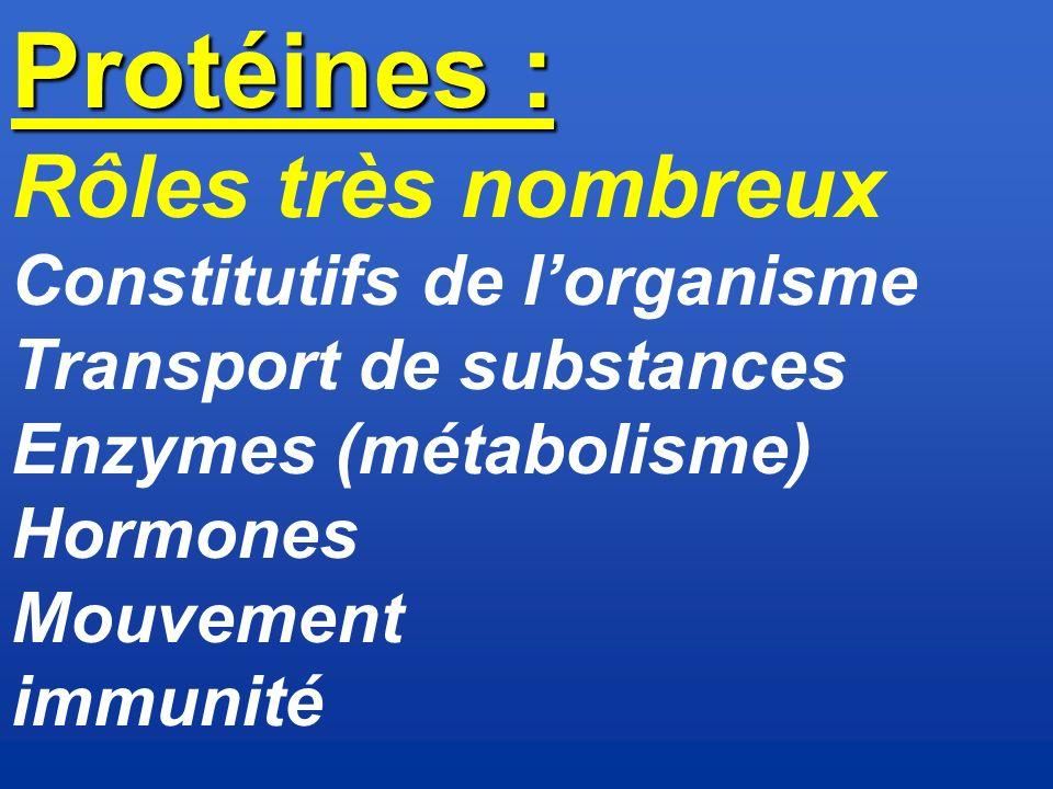 Protéines : Rôles très nombreux Constitutifs de l'organisme