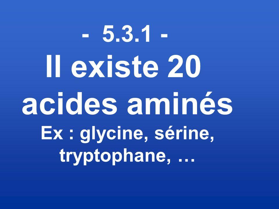 Il existe 20 acides aminés