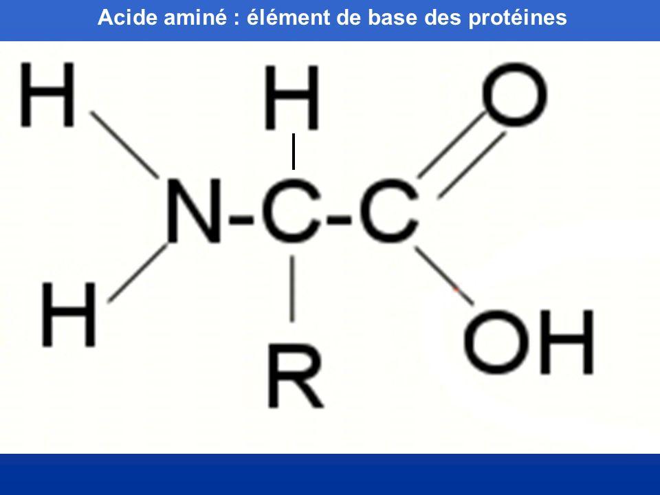 Acide aminé : élément de base des protéines