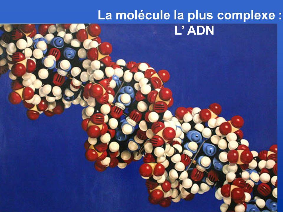 La molécule la plus complexe :