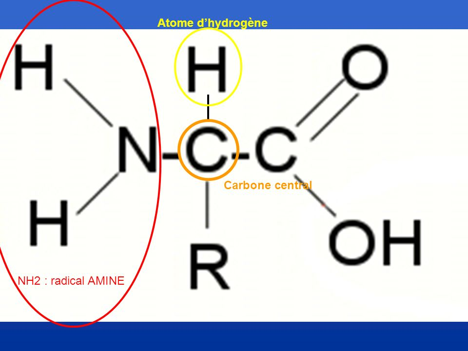 Atome d'hydrogène Carbone central NH2 : radical AMINE