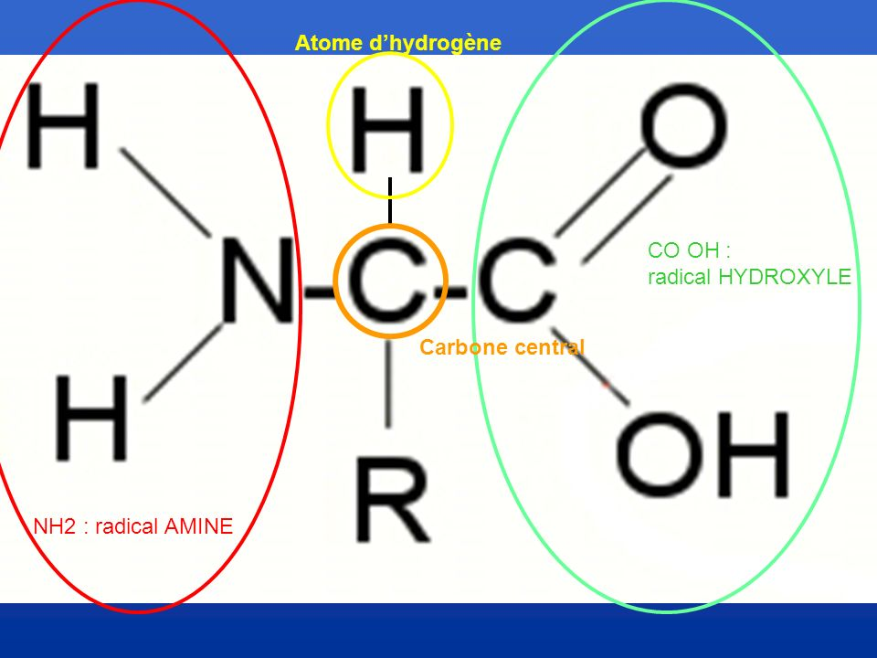 Atome d'hydrogène CO OH : radical HYDROXYLE Carbone central NH2 : radical AMINE