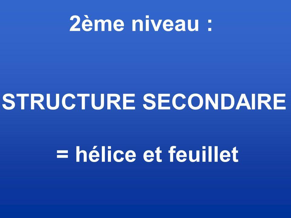 2ème niveau : STRUCTURE SECONDAIRE = hélice et feuillet