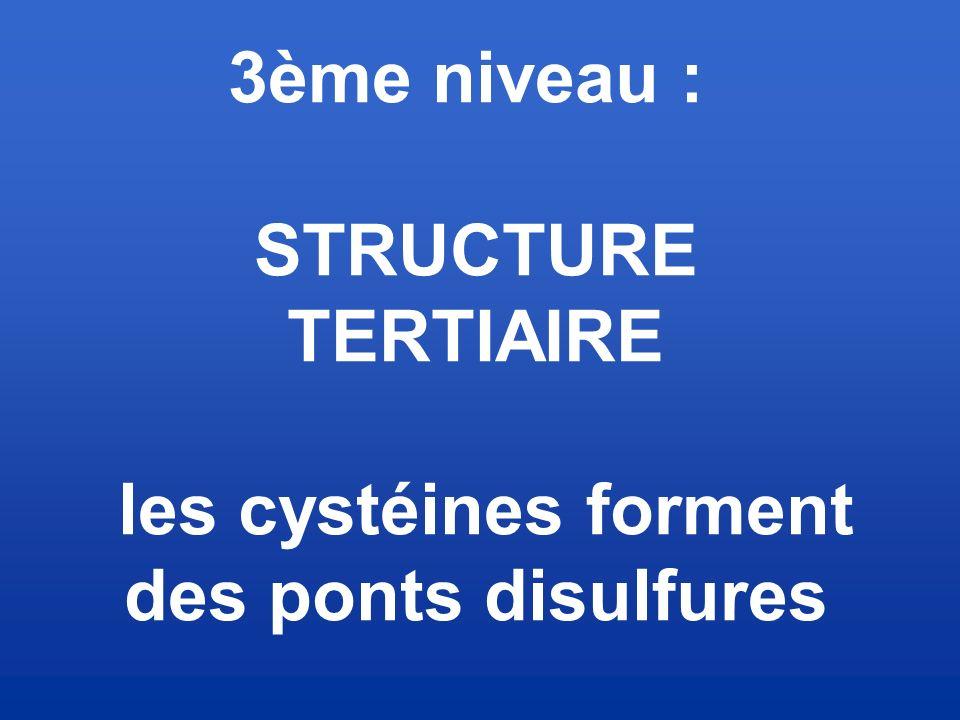 3ème niveau : STRUCTURE TERTIAIRE les cystéines forment des ponts disulfures