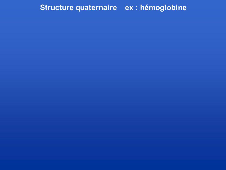 Structure quaternaire ex : hémoglobine