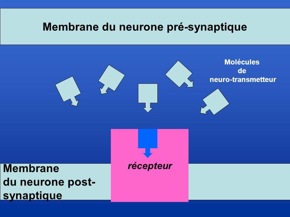 Membrane du neurone pré-synaptique
