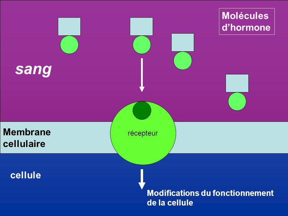 sang Molécules d'hormone Membrane cellulaire cellule