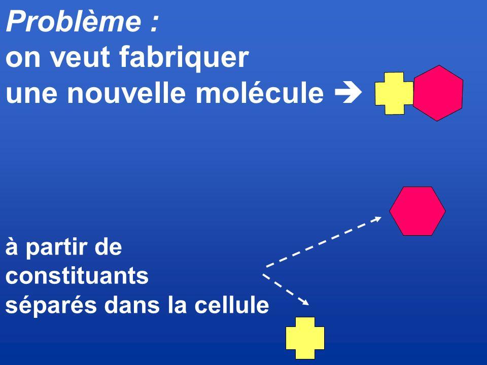 une nouvelle molécule 