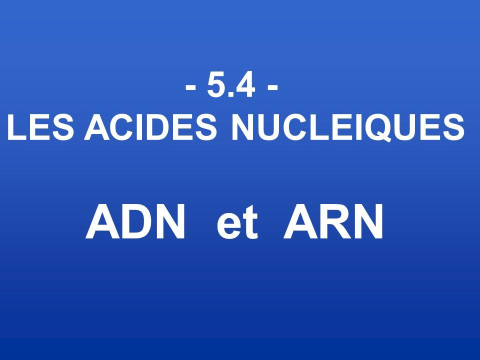 - 5.4 - LES ACIDES NUCLEIQUES ADN et ARN