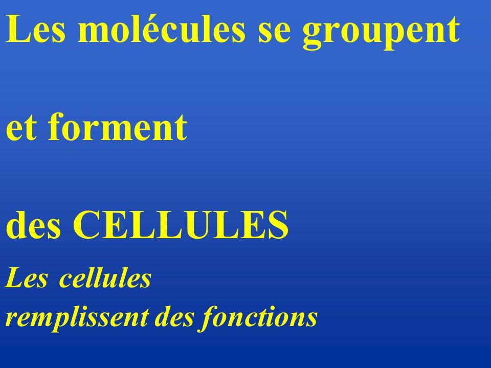 Les molécules se groupent et forment des CELLULES