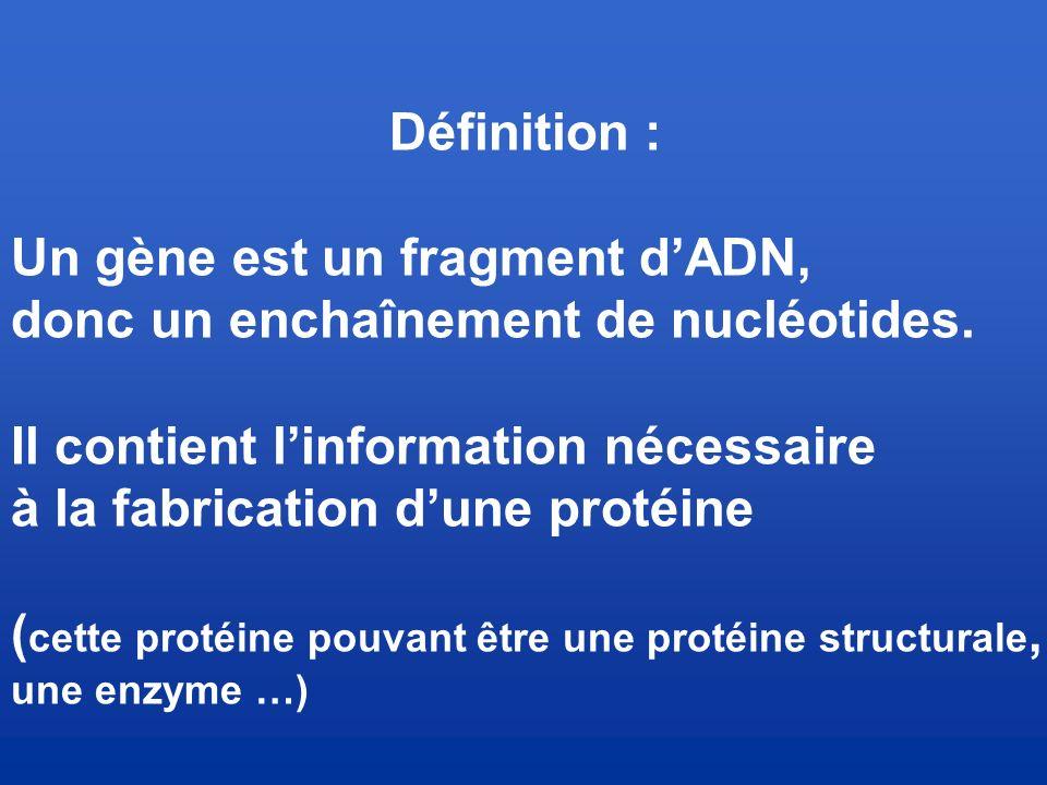 Un gène est un fragment d'ADN, donc un enchaînement de nucléotides.