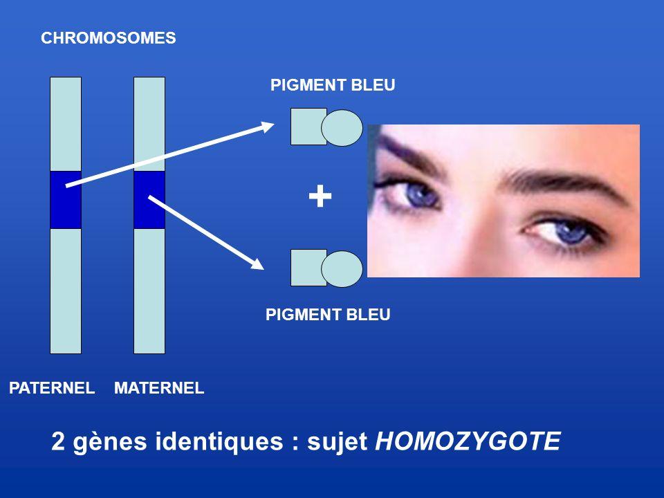 2 gènes identiques : sujet HOMOZYGOTE