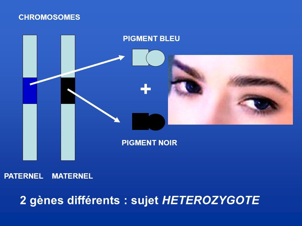 2 gènes différents : sujet HETEROZYGOTE