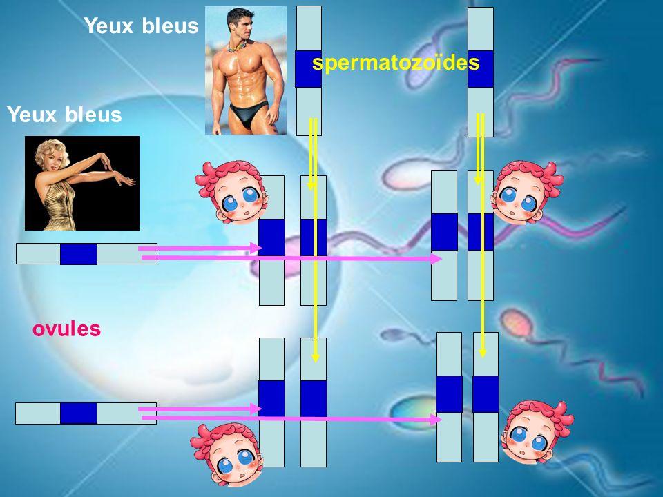 spermatozoïdes ovules Yeux bleus Yeux bleus