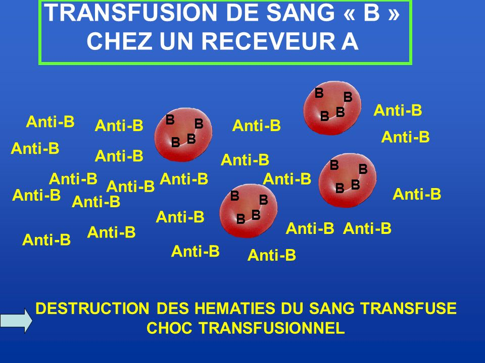 TRANSFUSION DE SANG « B » DESTRUCTION DES HEMATIES DU SANG TRANSFUSE