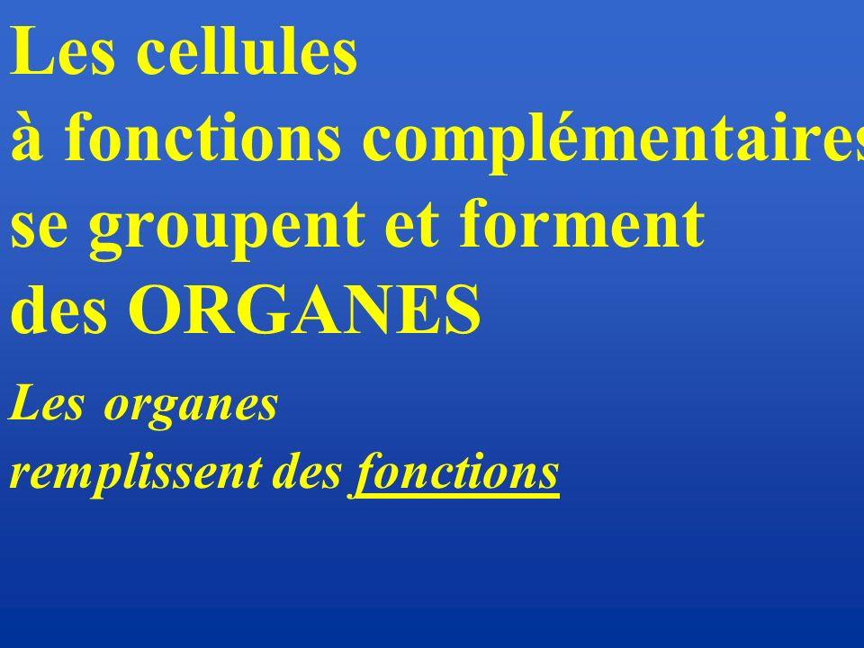 à fonctions complémentaires se groupent et forment des ORGANES