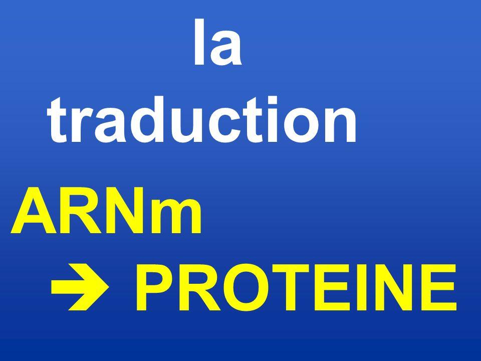 la traduction ARNm  PROTEINE