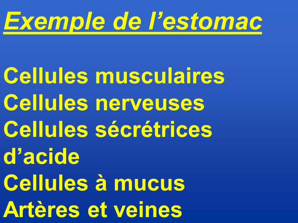 Exemple de l'estomac Cellules musculaires Cellules nerveuses