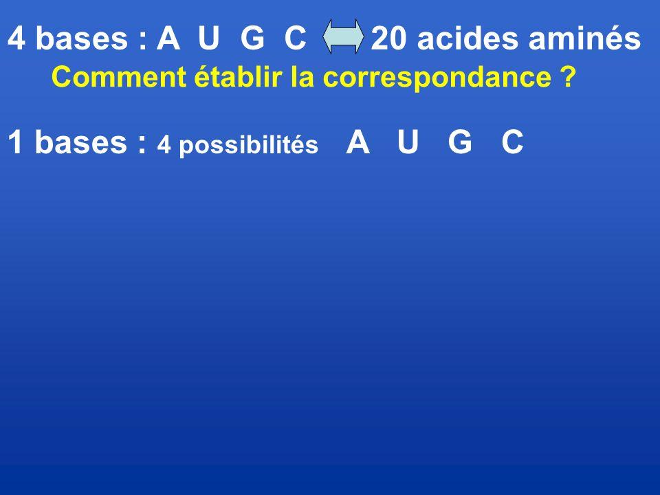 Comment établir la correspondance 1 bases : 4 possibilités A U G C