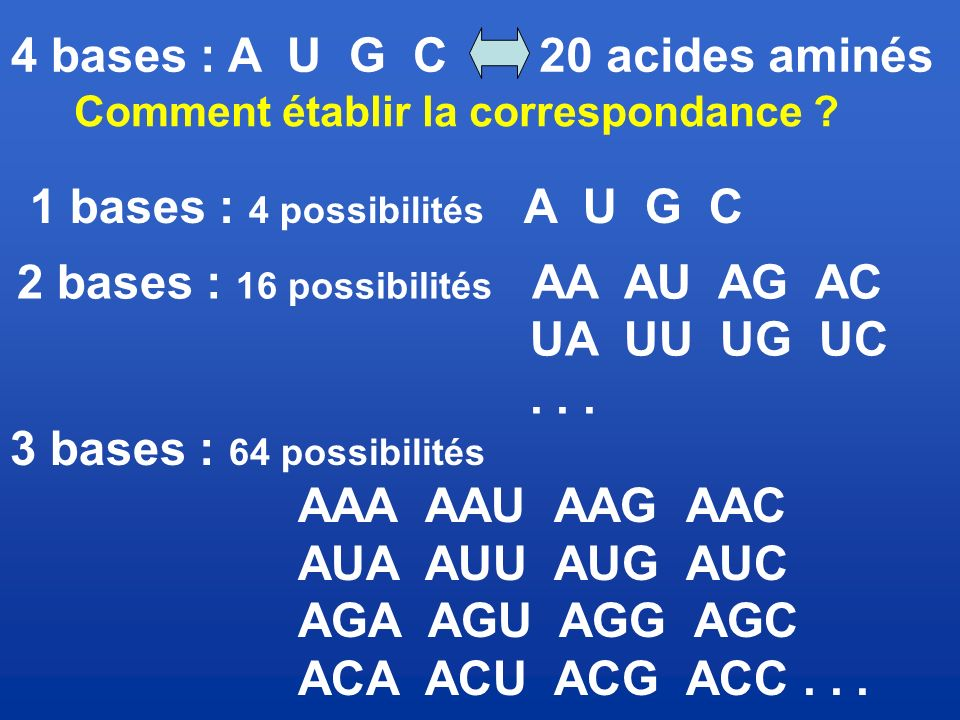 1 bases : 4 possibilités A U G C