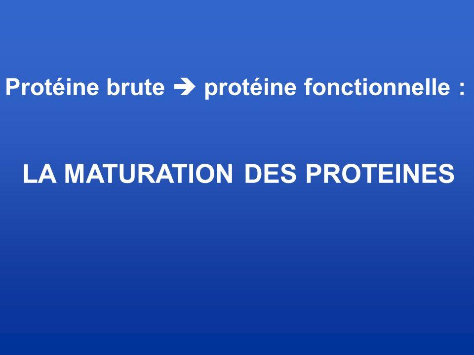 Protéine brute  protéine fonctionnelle : LA MATURATION DES PROTEINES