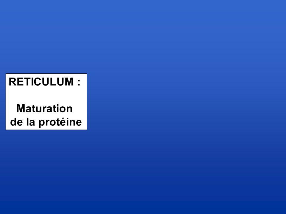 RETICULUM : Maturation de la protéine