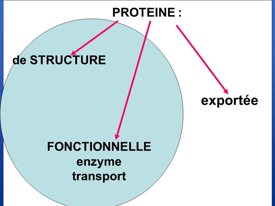 PROTEINE : de STRUCTURE exportée FONCTIONNELLE enzyme transport