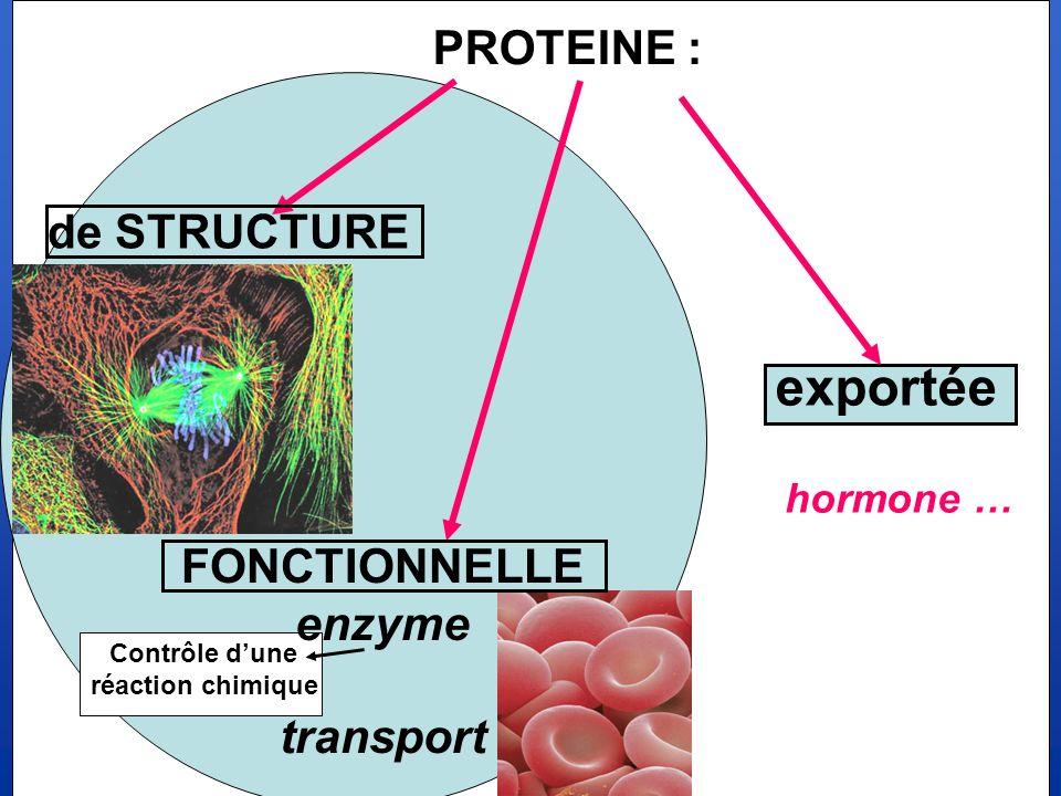 exportée PROTEINE : de STRUCTURE FONCTIONNELLE enzyme transport