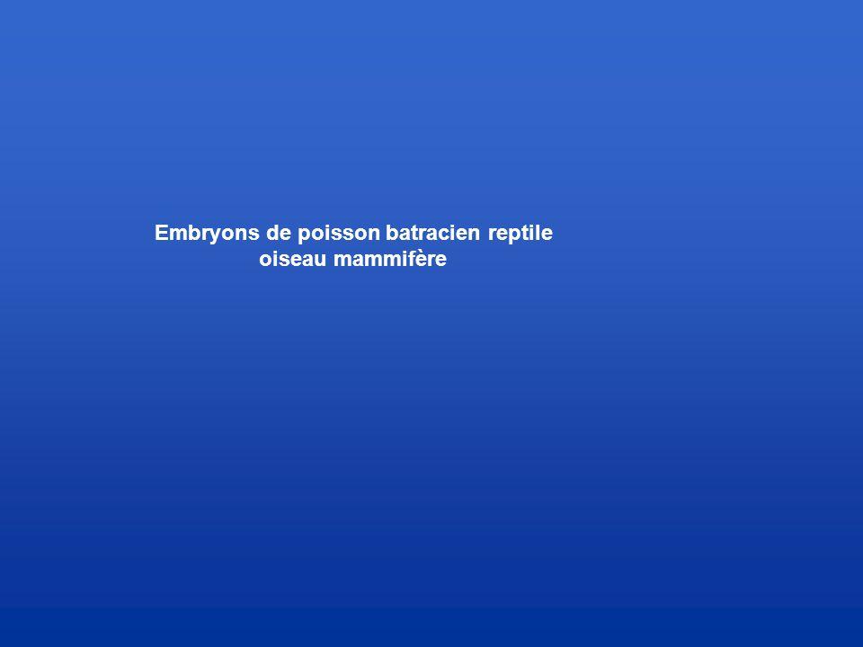 Embryons de poisson batracien reptile
