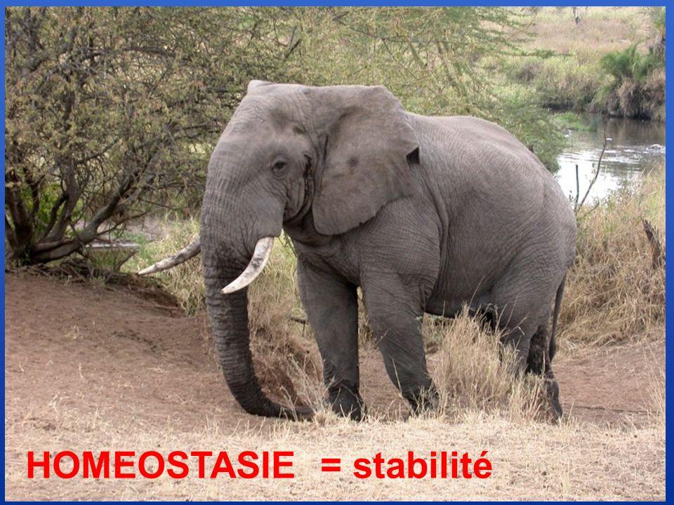 HOMEOSTASIE = stabilité
