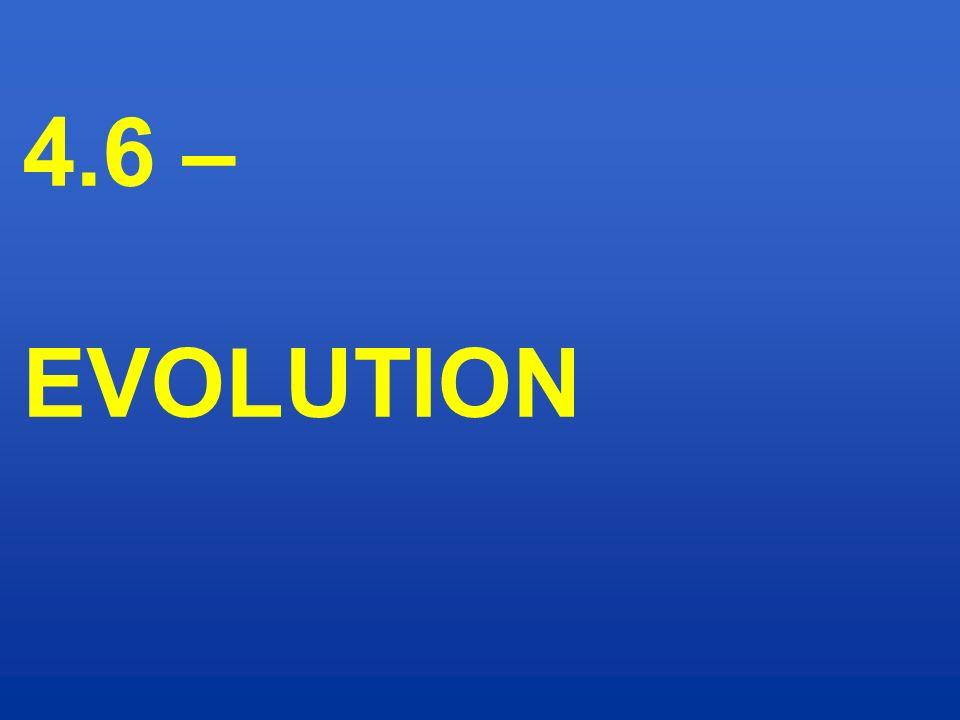 4.6 – EVOLUTION