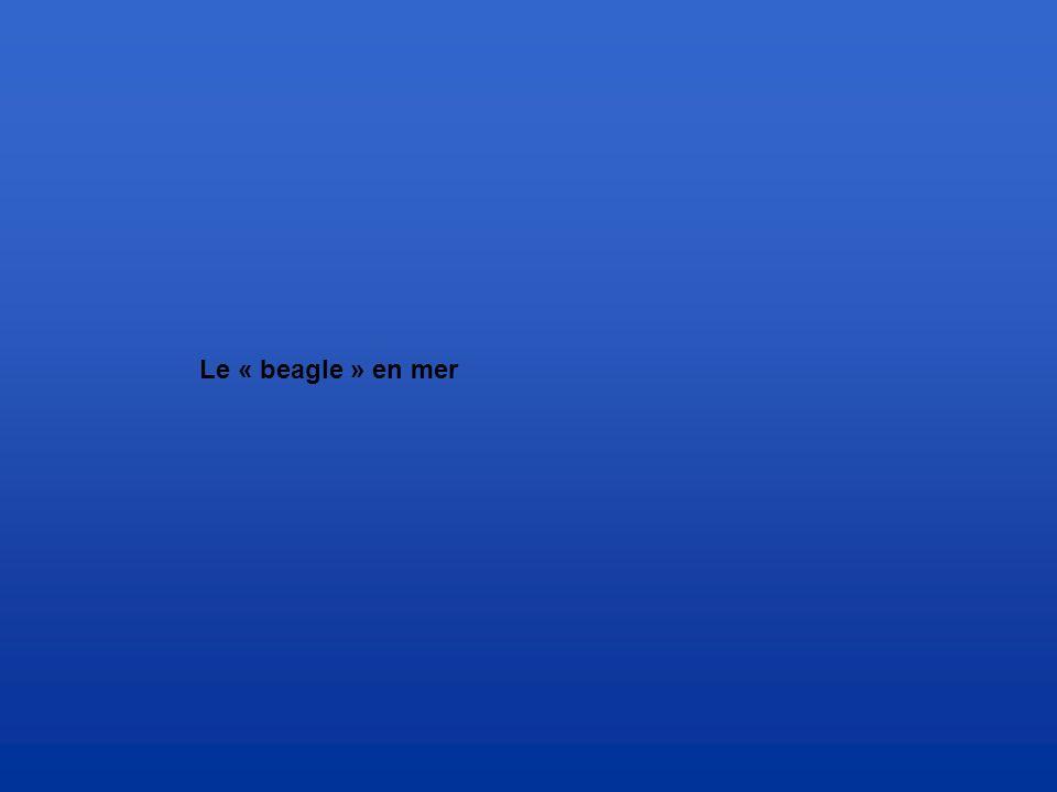 Le « beagle » en mer
