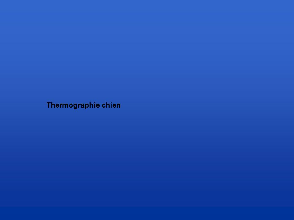 Thermographie chien