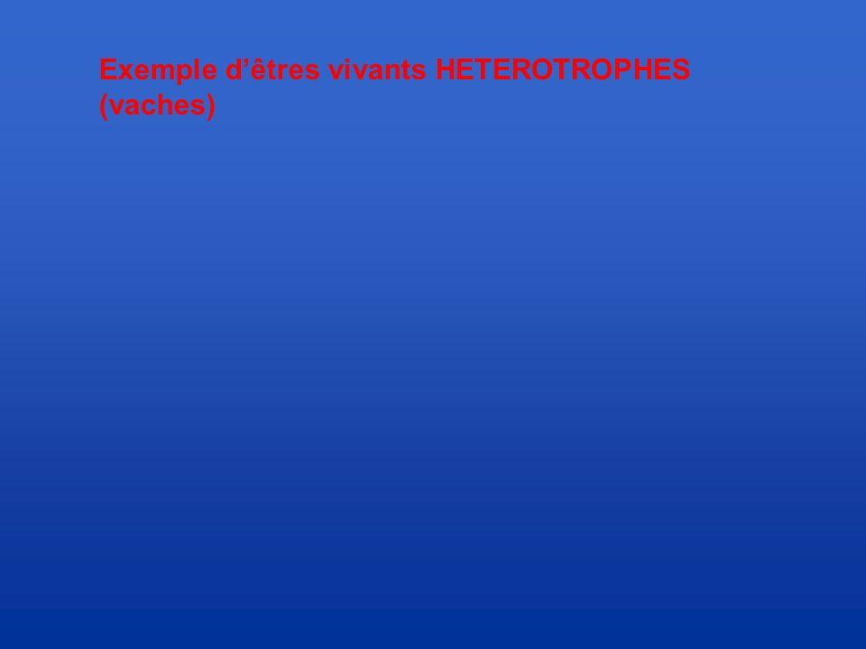 Exemple d'êtres vivants HETEROTROPHES