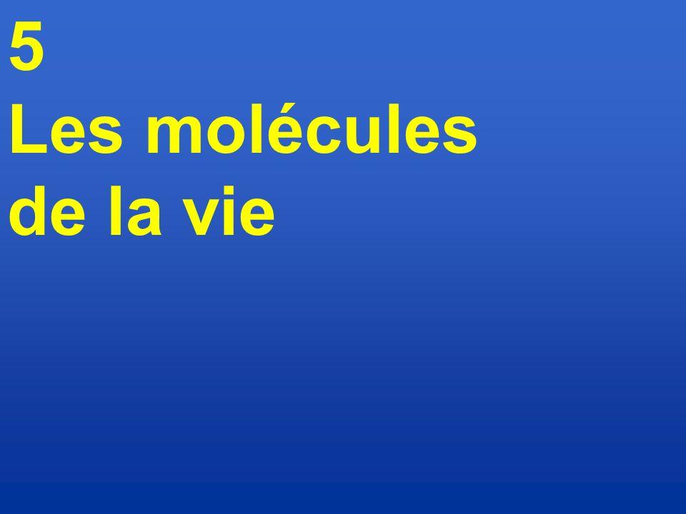 5 Les molécules de la vie