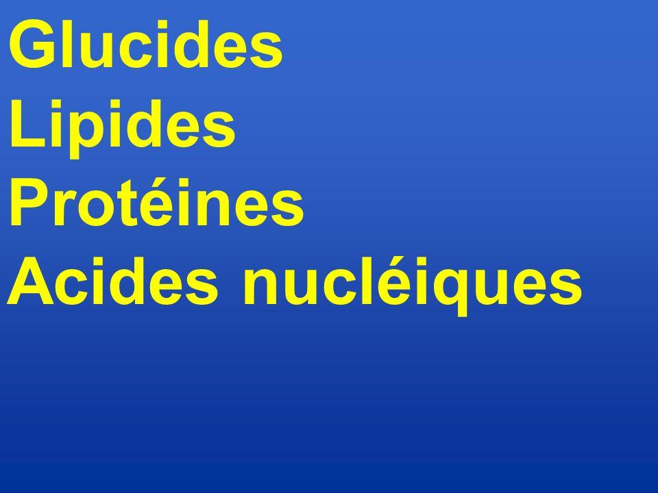 Glucides Lipides Protéines Acides nucléiques