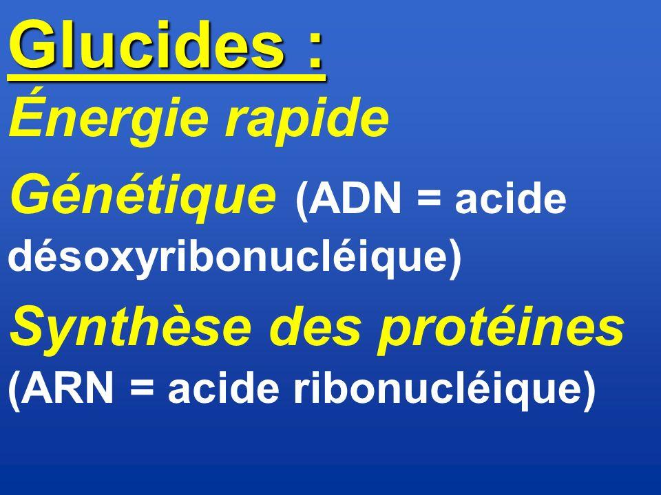 Glucides : Énergie rapide Génétique (ADN = acide désoxyribonucléique)