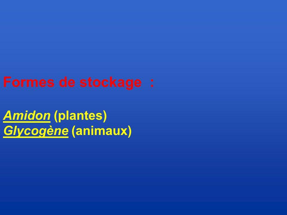 Formes de stockage : Amidon (plantes) Glycogène (animaux)