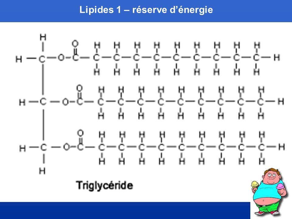 Lipides 1 – réserve d'énergie