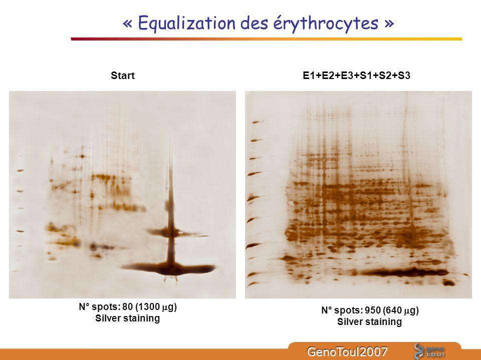 « Equalization des érythrocytes »