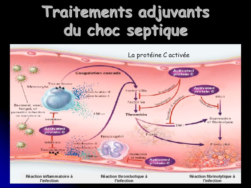 Traitements adjuvants du choc septique
