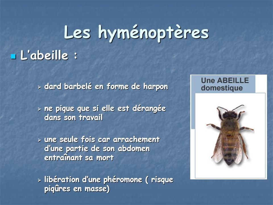Les hyménoptères L'abeille : dard barbelé en forme de harpon