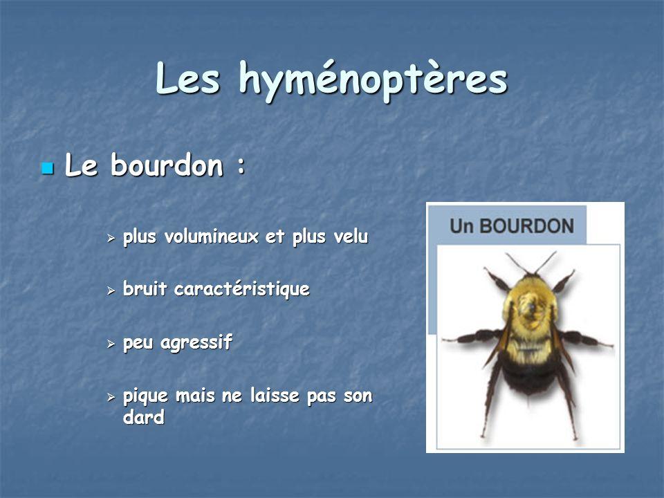 Les hyménoptères Le bourdon : plus volumineux et plus velu