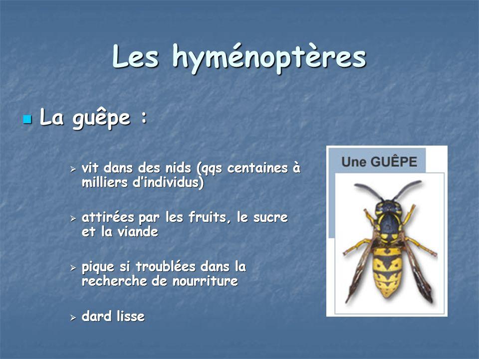 Les hyménoptères La guêpe :
