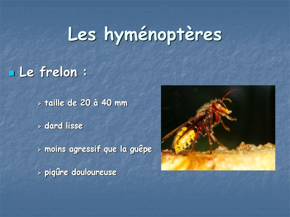 Les hyménoptères Le frelon : taille de 20 à 40 mm dard lisse