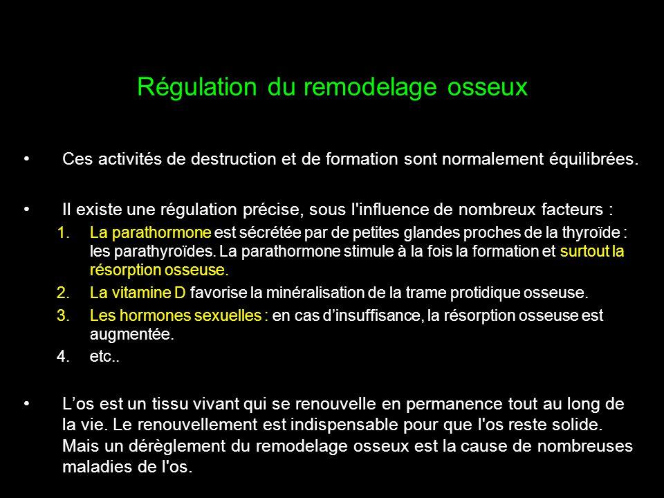 Régulation du remodelage osseux