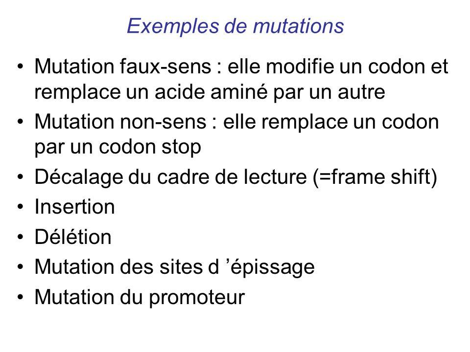 Exemples de mutations Mutation faux-sens : elle modifie un codon et remplace un acide aminé par un autre.