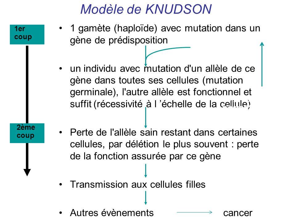 Modèle de KNUDSON 1 gamète (haploïde) avec mutation dans un gène de prédisposition.