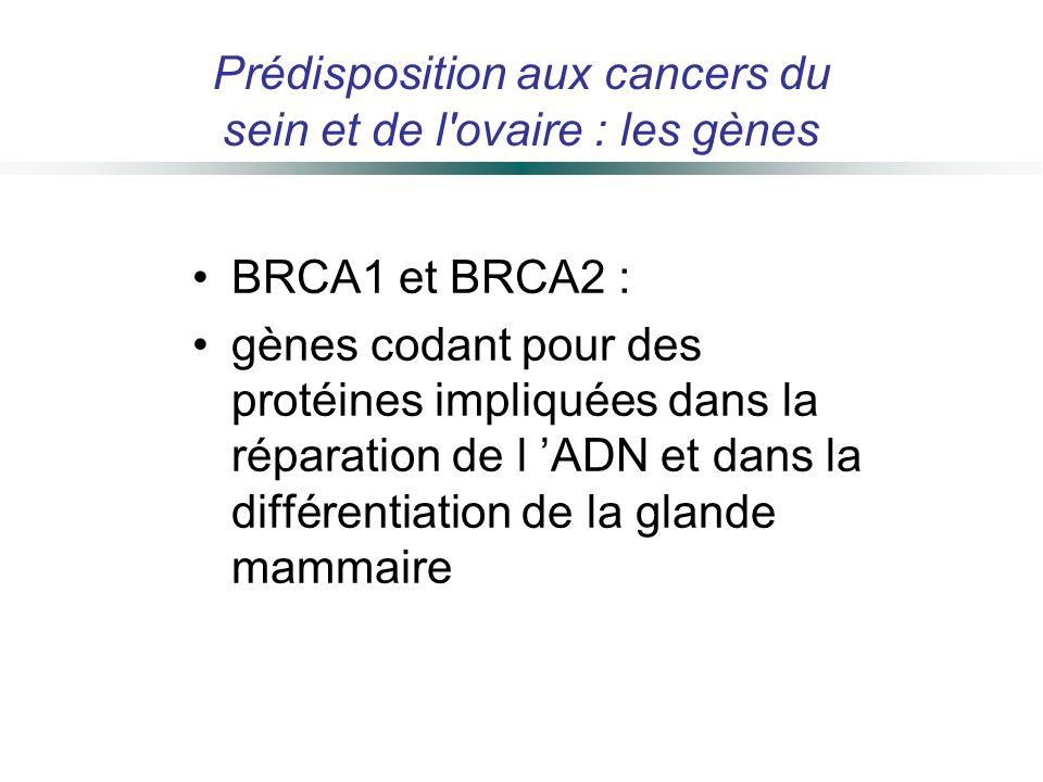 Prédisposition aux cancers du sein et de l ovaire : les gènes