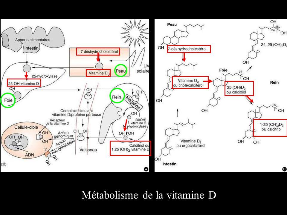 Métabolisme de la vitamine D